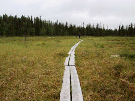 freetime activity: Nature trail in Lapland swamp