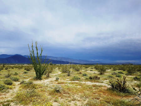 California desert vegetation and mountain horizont