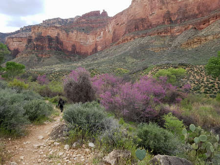 Hiking on trail in Grand Canyon in spring