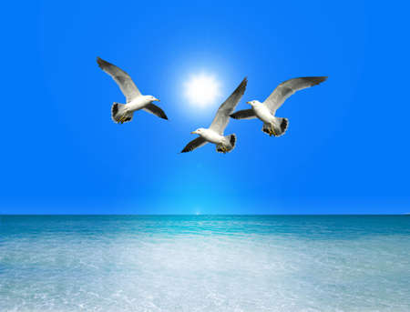 seabird: Seabird Stock Photo