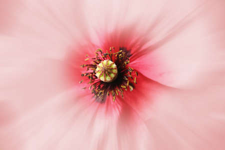 flower photos: macro flower