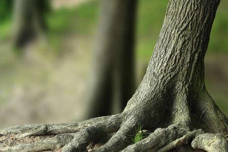 immagine gratuita: albero