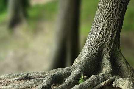 Baum Standard-Bild - 7280742