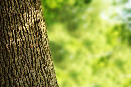 free stock images: tree