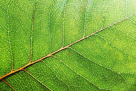 stock photograph: leaf Stock Photo