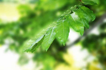stock photographs: leafs Stock Photo