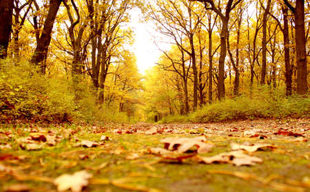 autumn background Stock Photo - 8066763