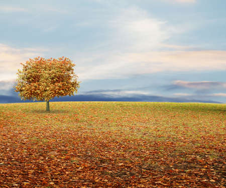 royalty free: autumn background Stock Photo