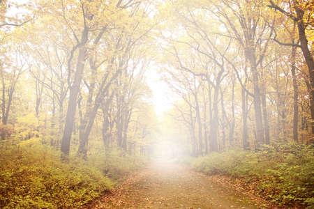royalty free: autumn background Stock Photo