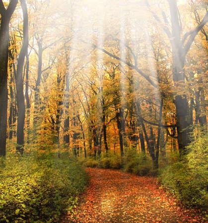 autumn background Stock Photo - 8066778