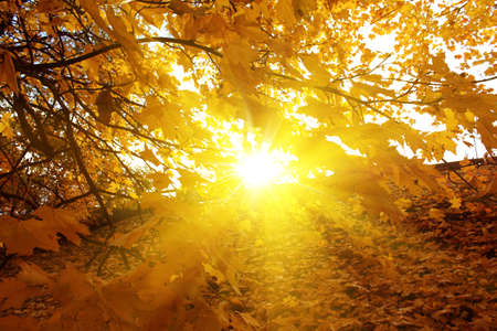 Fondo de otoño  Foto de archivo