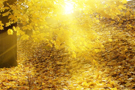 autumn background Stock Photo - 8164207