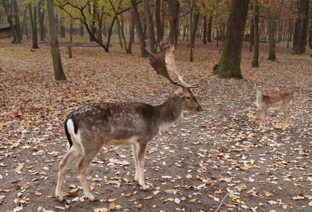 deers in forest photo