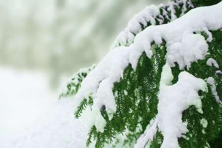 winter photos: snow covered  tree Stock Photo