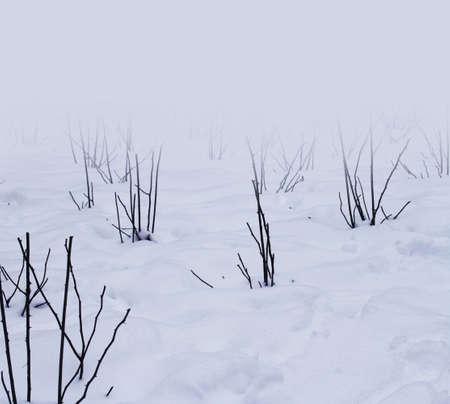 snow winter photo