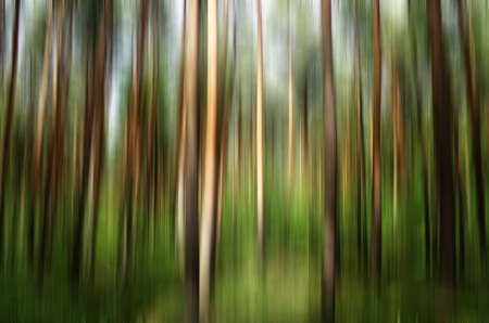 forest abstract Stock Photo