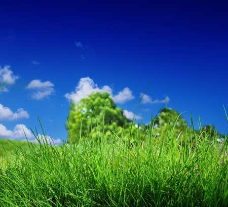 groen gras en een blauwe hemel