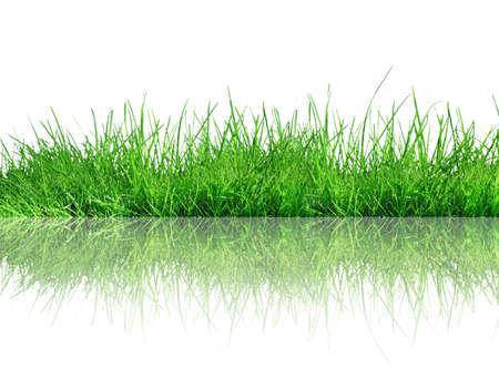 gras op witte achtergrond