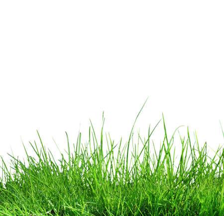 greengrass: grass on white background Stock Photo