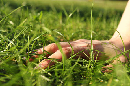 Hand and  green gras Stock Photo