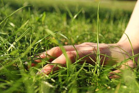 dasiy: Hand and  green gras Stock Photo