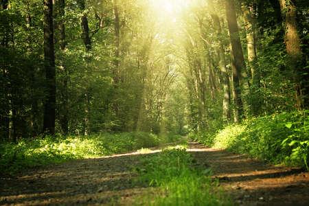 Bäume in einem Wald im Sommer Standard-Bild - 10350530