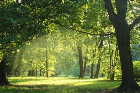 bomen in een bos 's zomers Stockfoto