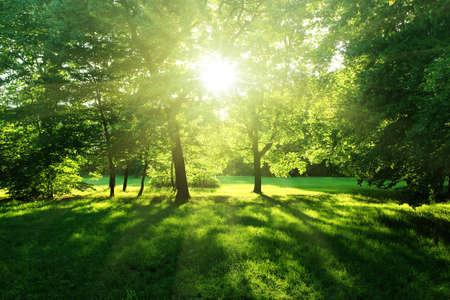 bomen in een bos de zomer