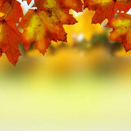 szeptember: Őszi levelek Stock fotó