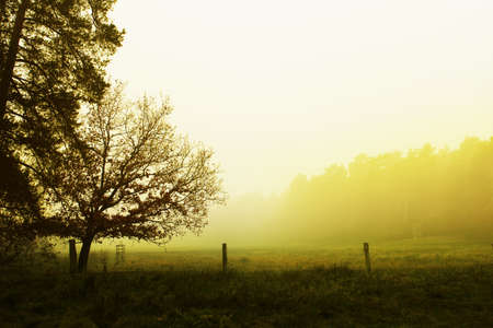 beautiful landscape with fog photo