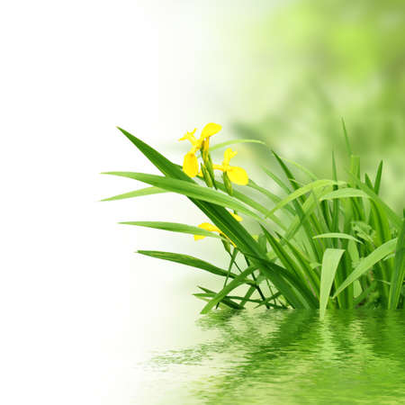 breeze: plants and water Stock Photo