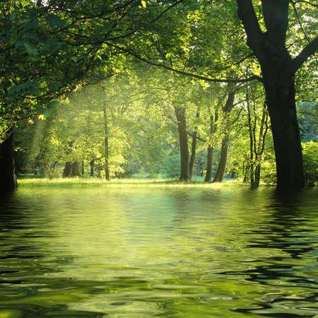 水と緑の森で太陽光線 写真素材