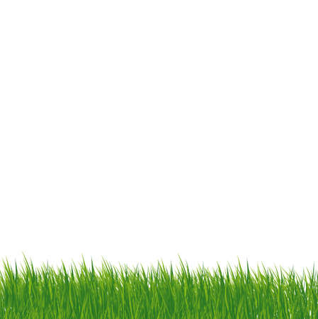 mow: grass on white background Illustration
