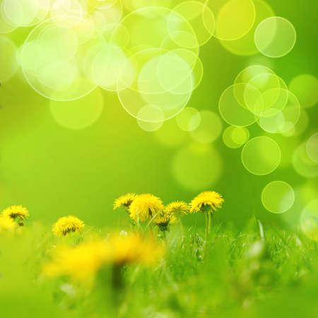 cicla: Las flores amarillas de cempas?l Foto de archivo