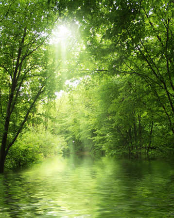sunbeam in green forest with water Stock Photo