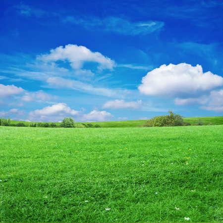 grassy field: grass field with cloudy sky