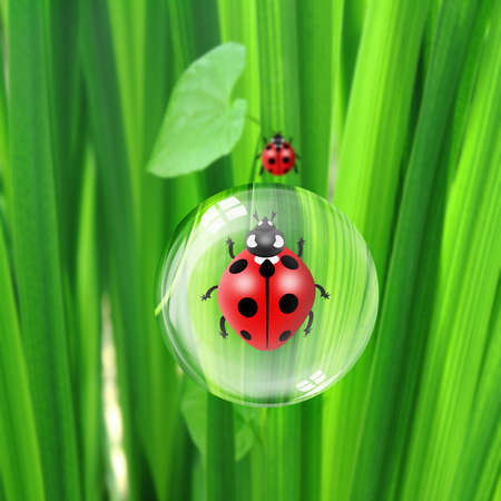 dew and ladybugs photo