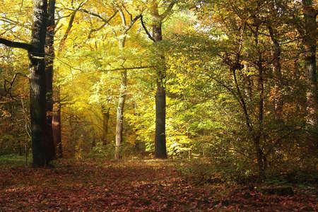 mother earth: autumn background Stock Photo