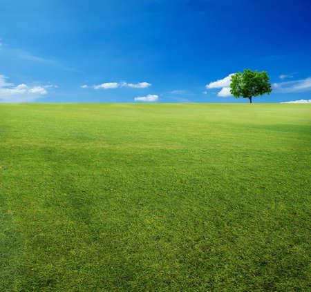 broad leaf: tree and blue sky