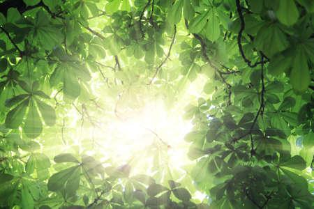 crecimiento planta: Fresh green leaves in springtime.