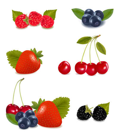 Collection of berries.   Vector