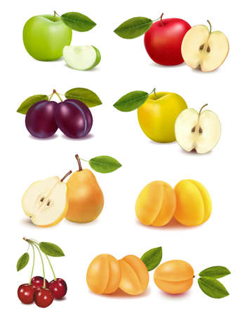 Group with different sorts of fruit.   illustration.  Vector