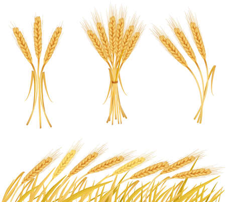 Ripe yellow wheat ears, agricultural   illustration  Illustration