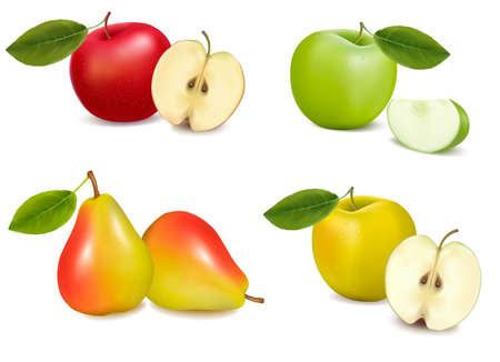 Group of pears and apples. illustration.  Vector