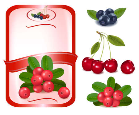 cranberry fruit: Red label with berries.  Illustration
