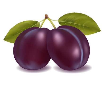 purple leaf plum: Two plums with leaves. illustration.