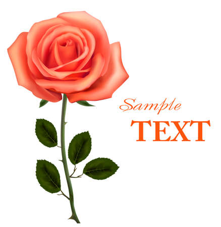 roses pattern: Beautiful orange rose with leaves isolated on white. illustration Illustration