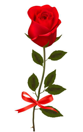 single flowers: Beautiful red rose with a bow.  Illustration