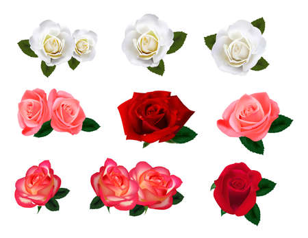 whit: Set of a beautiful roses on a white background.