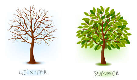 arboles de caricatura: Dos temporadas - invierno, verano. �rbol de arte hermoso para su dise�o. ilustraci�n.  Vectores